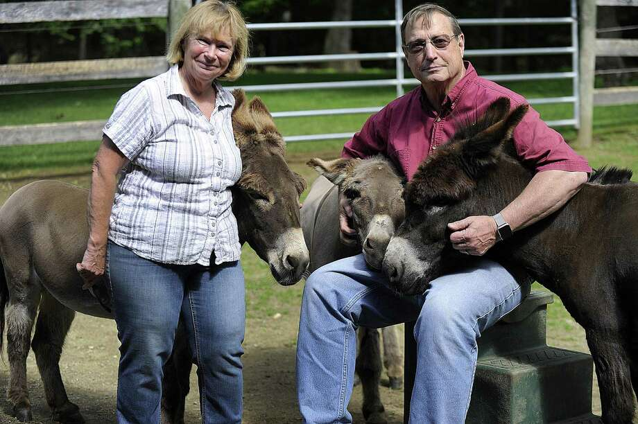 Megg and Ted Hoffman with their three remaining donkeys on their Kent farm Thursday, June 1, 2017. A fourth donkey was killed by a bear recently. Photo: Carol Kaliff / Hearst Connecticut Media / The News-Times