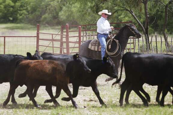 Dr. Richard Thorpe, president of the Texas and Southwestern Cattle Raisers Assocation, at his ranch in Winters, Texas . Thorpe is a first generation cattle rancher who grew up in Highland Park near Dallas and discovered a passion for ranching at an early age.