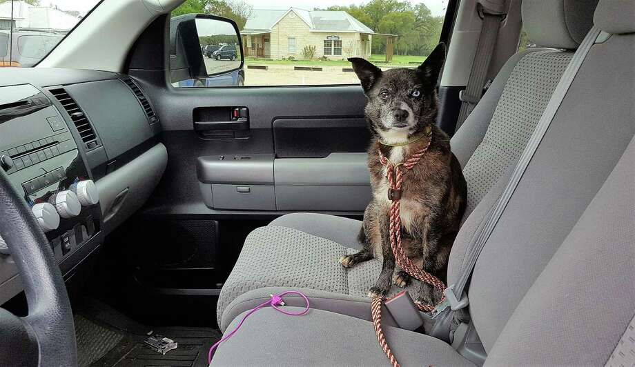 If you're thinking of leaving your pup in a car during extreme heat or cold, think again. Photo: Courtesy Photo