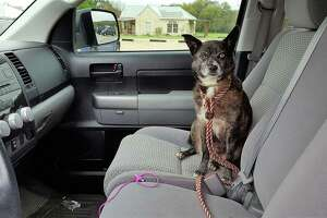 It's Texas, it's summer, and it's hot. So, if you leave your pets (or kids) in a hot car, even with windows cracked, chances are greater in Texas that they could die.