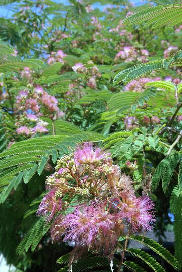 Kathy Huber Answers Houston Gardening