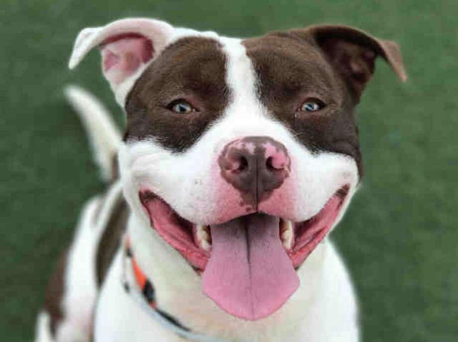 Martinez Animal Shelter Dogs For Adoption