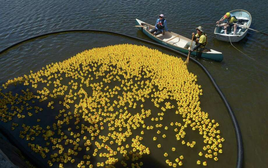 Rubber duckies paddle Saugatuck River for a good cause - The Hour