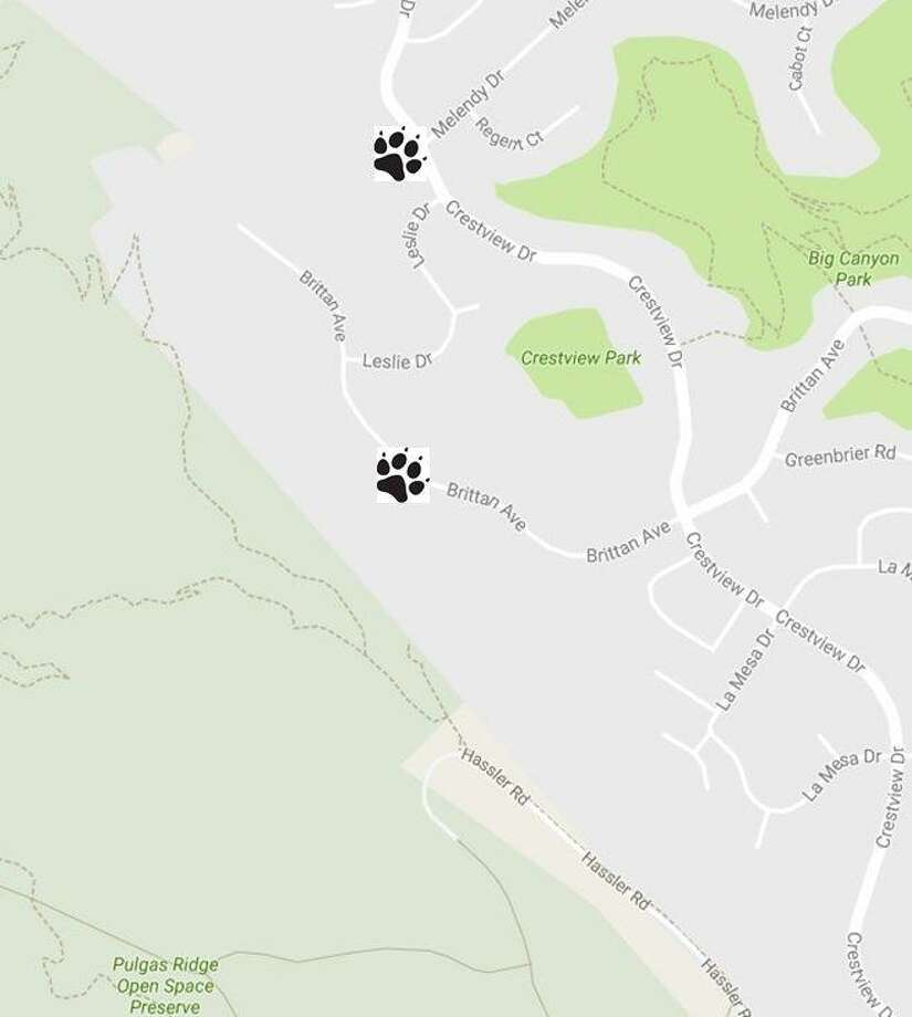 A map shows the two locations mountain lions were spotted on Saturday night in San Carlos. Photo: San Mateo County Sheriff's Office / /