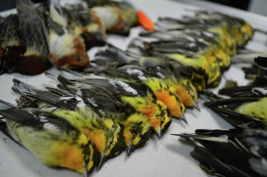 Nearly 400 birds died after hitting the 23-story American National Building on May 3. Building officials now say outside lights will be shut off. / handout