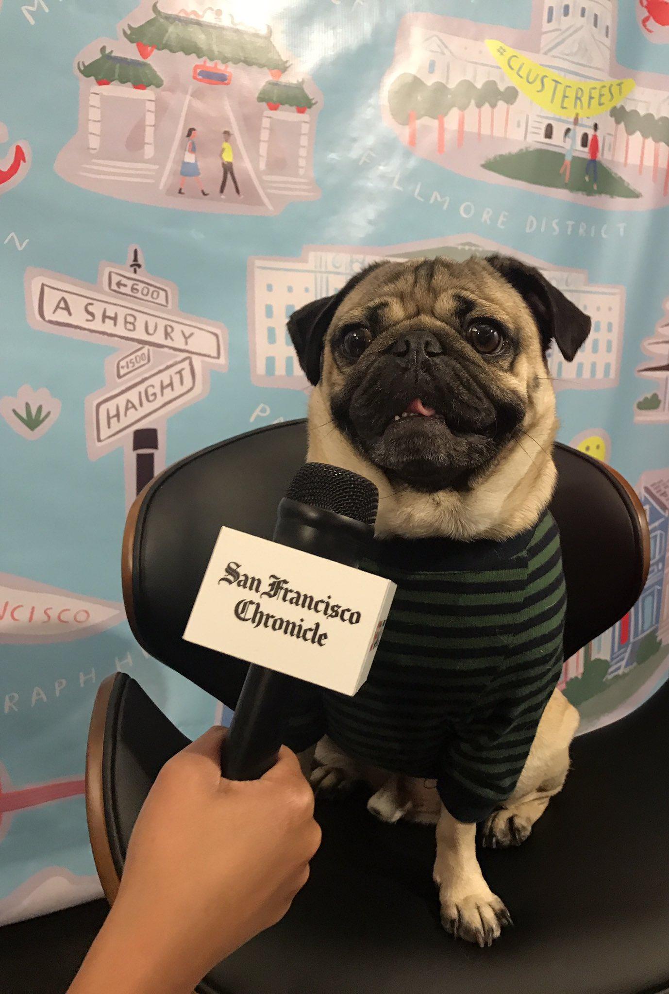 Doug the pug among celebrities at clusterfest sfgate m4hsunfo