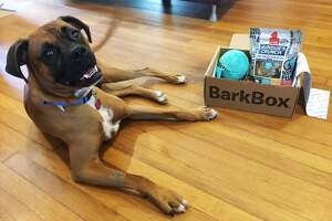 Prince, a rescue boxer, received this special BarkBox.com. It came with a squeaky ball and an assortment of tasty treats.