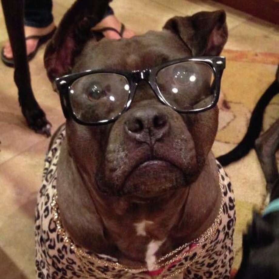 A nearly blind dog sees a whole new world after getting contacts. (Gremlin's Facebook page)>>Click through to see a Houston photo shoot that promoted the adoption of local rescues.
