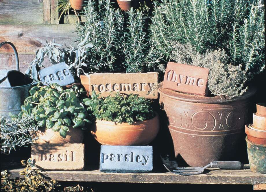 Herbs such as rosemary, thyme, parsley, sage and basil grow well in containers that can be moved indoors if the weather turns cold. Photo: Courtesy Photo