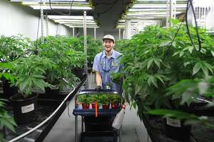 A bill that would have legalized marijuana for adult recreational use was pulled from the House floor after a 90-minute debate Tuesday. The state approved medicinal marijuana, shown here growing at Advanced Grow Labs in West Haven, back in 2012.