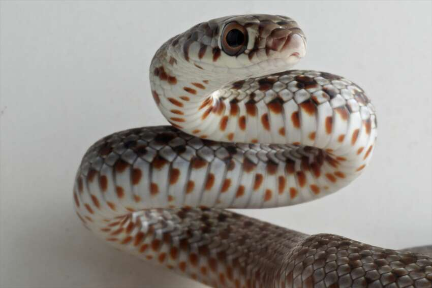 2. Don't shoot at the reptile. The biologist said that shooting at the snake is riskier for the human than the reptile.