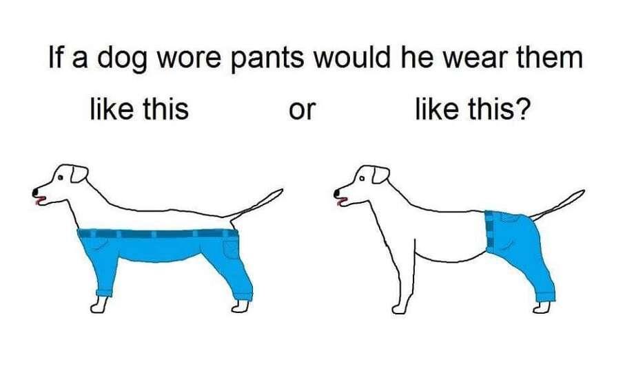 How Would a Dog Wear Pants? (www.imgur.com)