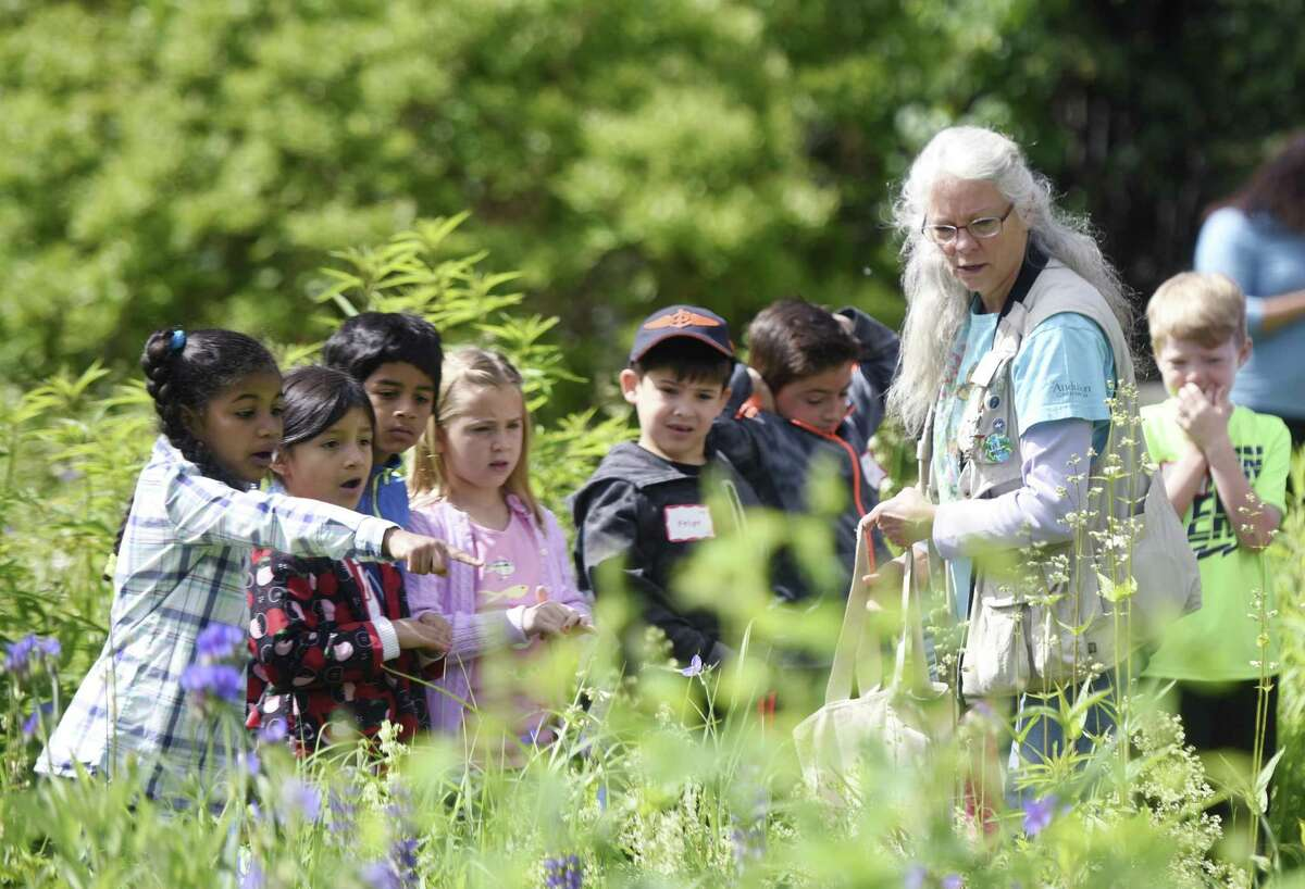 International School at Dundee first-graders look for insect species with volunteer Teacher Naturalist Camille Broderick on a class trip to Audubon Greenwich in Greenwich, Conn. Wednesday, June 7, 2017.