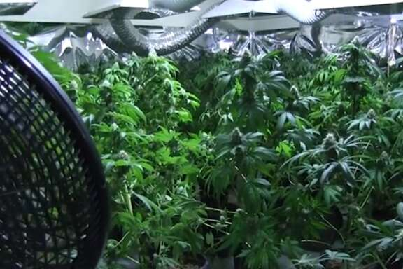 Harris County investigators followed tips from concerned neighbors on June 7, 2017 and busted a massive marijuana grow operation inside a home near Cy Falls High School.