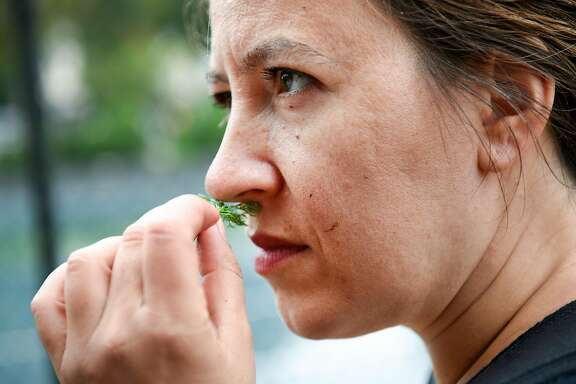 Nassim Nobari, of the group Seed the Commons, sniffs a piece of camomile plant at the Victoria Manalo Draves Community Garden in San Francisco, CA, on Thursday June 8, 2017.