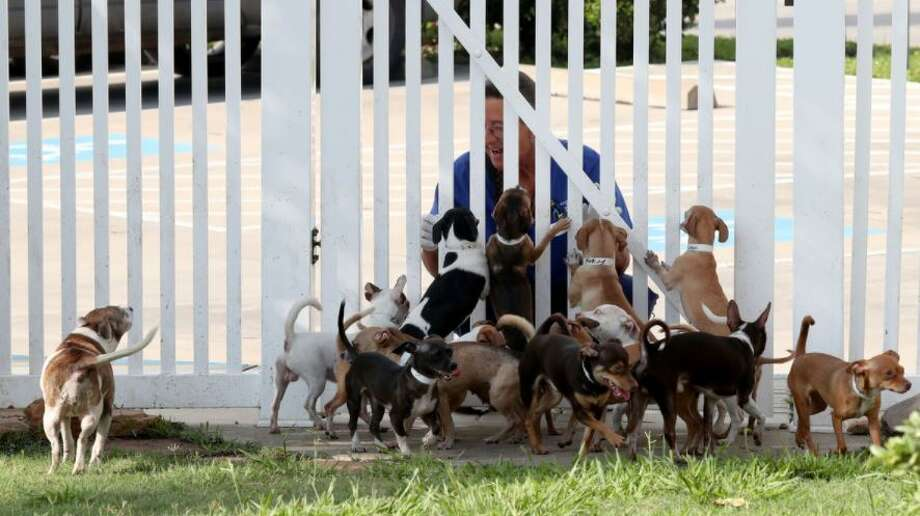 Dozens of small dogs were seized from a Galveston home. Photo: Jennifer Reynolds/The Galveston County Daily News