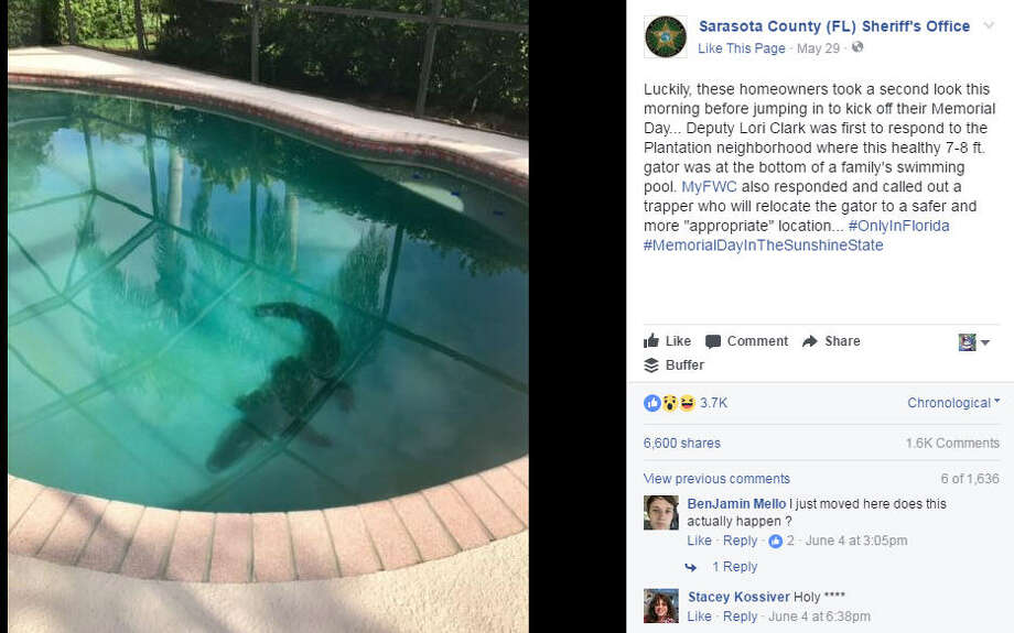 A Florida alligator breaks through a screen and swims in a pool before getting captured.