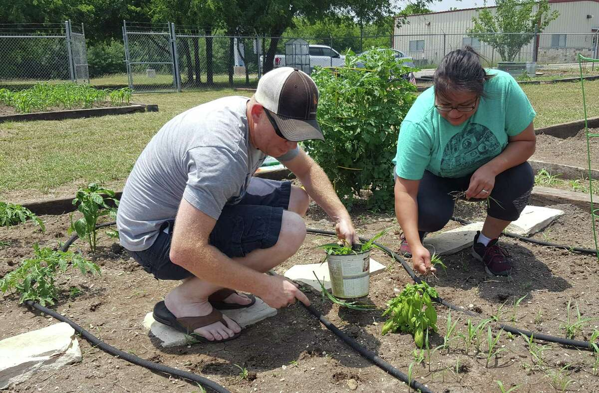 Jason and Janie Norris pull weeds and tend to their plot in the Kirby Community Garden.