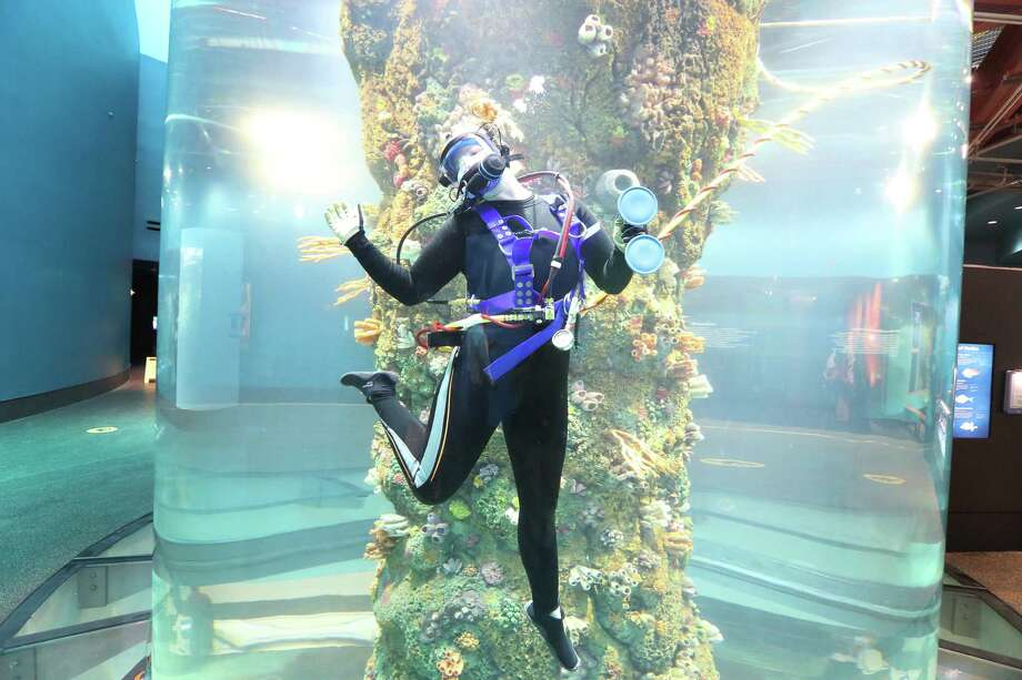Moody Gardens Biologist / Diver Kaitlin Buhler talks inside a 30,00 gallon, 2 story saltwater tank in the newly renovated Aquarium Pyramid following a $37 million renovation Thursday, May 18, 2017, in Galveston. Media had the opportunity to experience the new Gulf of Mexico Oil Rig Exhibit complete with an in-tank diver presentation and Q&A session featuring a new diver communication system. They also viewed the Humboldt Penguin Exhibit, Flower Garden Banks Exhibit and the Caribbean Exhibit in this final sneak peak of the Aquarium Pyramid before its public grand reveal on May 27.  ( Steve Gonzales  / Houston Chronicle ) Photo: Steve Gonzales, Staff / © 2017 Houston Chronicle