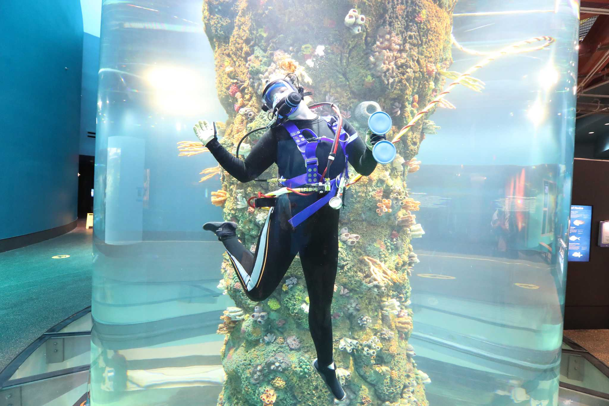 Renovated Aquarium Pyramid At Moody Gardens Brings Sea Change To Galveston Houston Chronicle