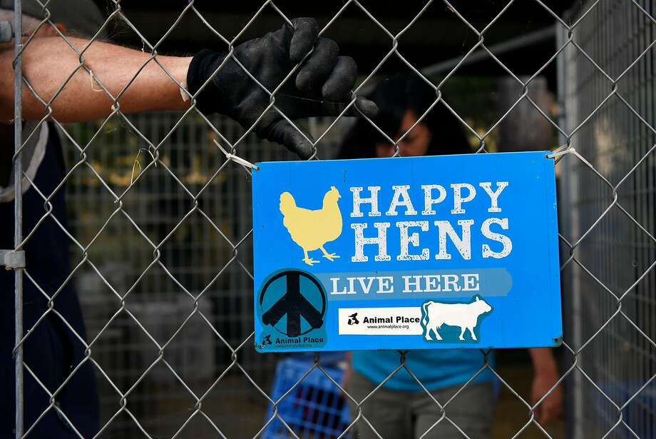 A sign on the chicken coop at Animal Place Rescue and Adoption Center in Vacaville. Photo: Michael Short, Special To The Chronicle