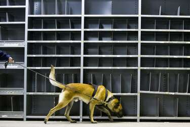 Pot-sniffing dogs' jobs haven't gone up in smoke - SFChronicle com