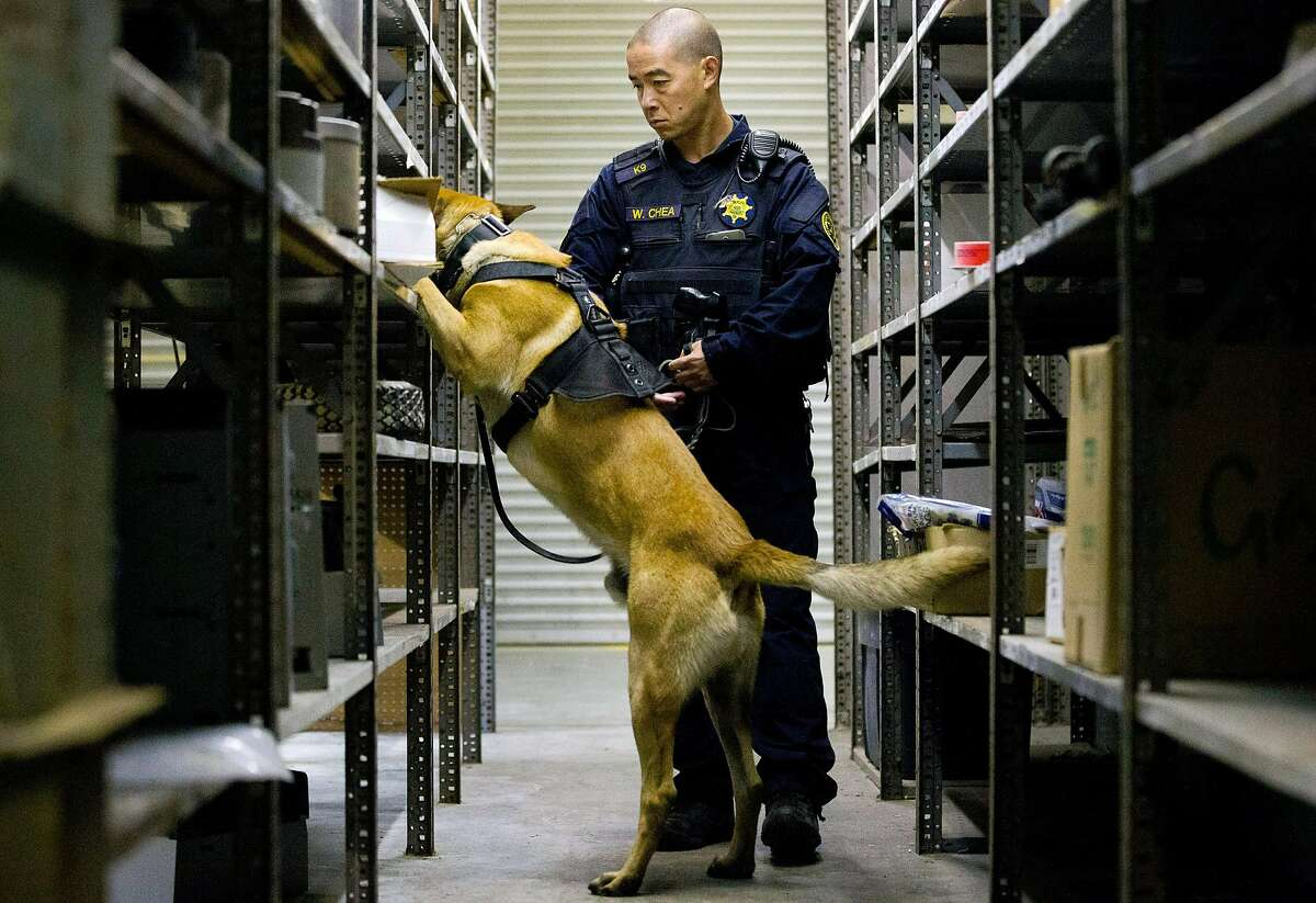 Alameda County sheriff's deputy Wesley Chea and his dog Denny search for drugs during narcotics K-9 training at the Oakland International Airport on May 11, 2017.