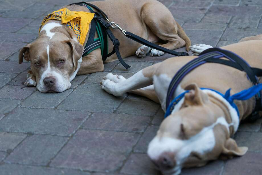 A little snooze, and I'll get right back to the party; the benefits of time out Photo: James Tensuan, Special To The Chronicle