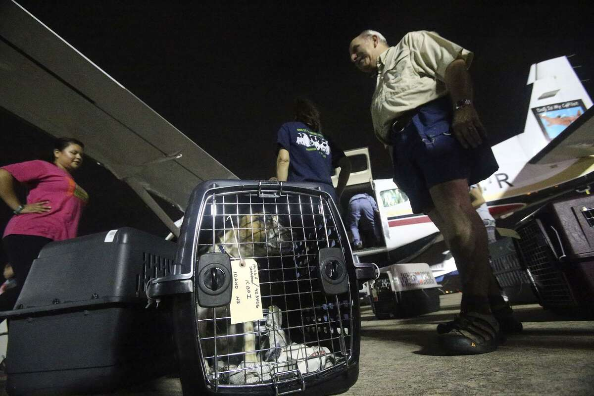A dog inside a transport container looks out before being loaded onto a Cessna Grand Caravan bound for Idaho. As a part of their no-kill efforts, San Antonio Pets Alive volunteers loaded more than 50 dogs on the plane early Tuesday to transport them for adoption there, relieving pressure on San Antonio animal shelters. Pilot Peter Rork said the 8-hour flight to Boise, Idaho will stop in Fort Collins, Colorado to refuel.