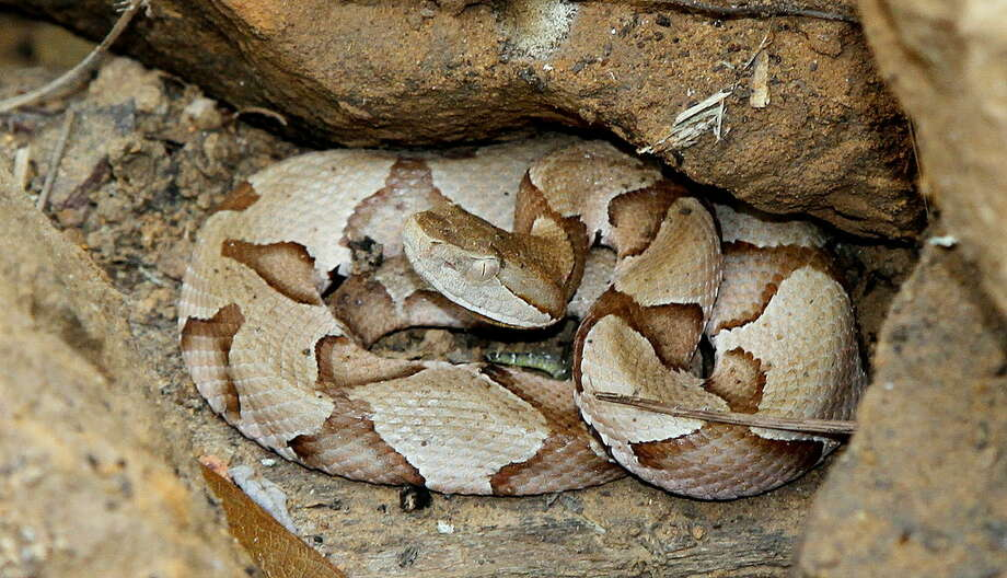 Snake In The Backyard What To Do worried about snakes coming in your yard? - houston chronicle