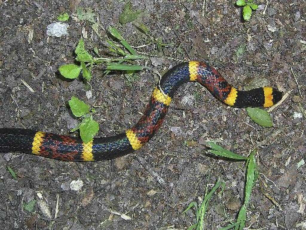 worried about snakes coming in your yard houston chronicle