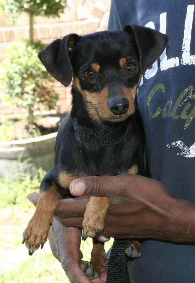 Animal Rescue Houston Chronicle