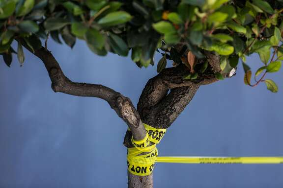 Caution tape is wrapped around a tree outside a UPS facility where UPS workers were evacuated due to active shooting on Utah Street and 16th Street in San Francisco, California, on Wednesday, June 14, 2017.