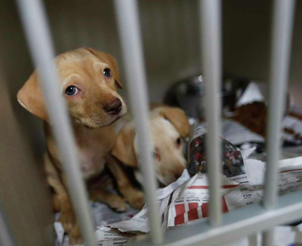Harris County ramping up animal welfare initiatives Houston