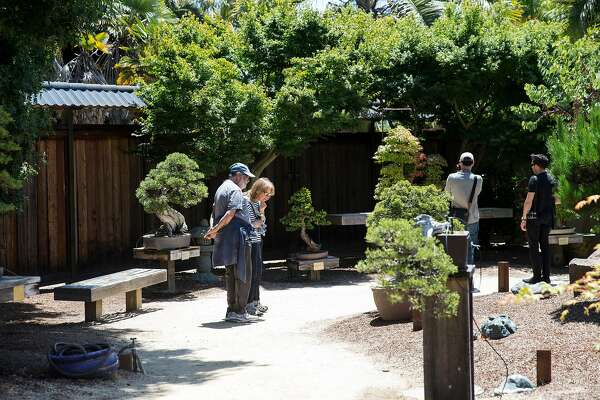 Visitors to the Bonsai Garden at Lake Merritt look at the trees on display at the garden in Oakland, Calif., on Sunday, June 4, 2017. Admission to the garden is free although donations are welcomed.