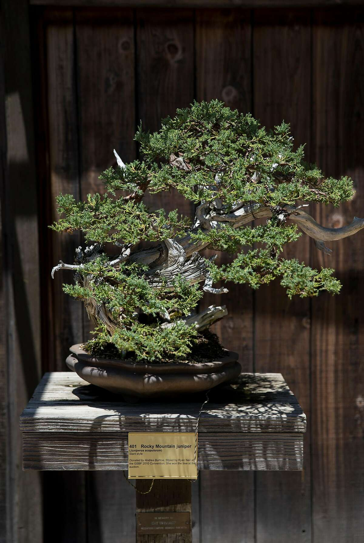 A bonsai tree is seen on display in the Bonsai Garden at Lake Merritt in Oakland, Calif., on Sunday, June 4, 2017. Admission to the garden is free although donations are welcomed.
