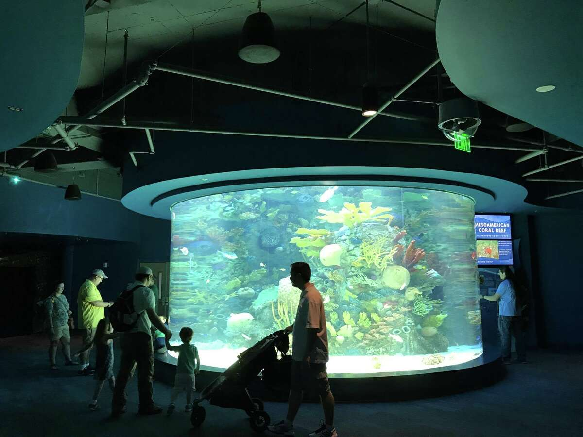 Texas State Aquarium 2710 N. Shoreline Blvd.Open daily from 10 a.m.-5 p.m.