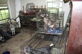 Houston SPCA seized 67 dogs from a home in Cleveland on June 15.