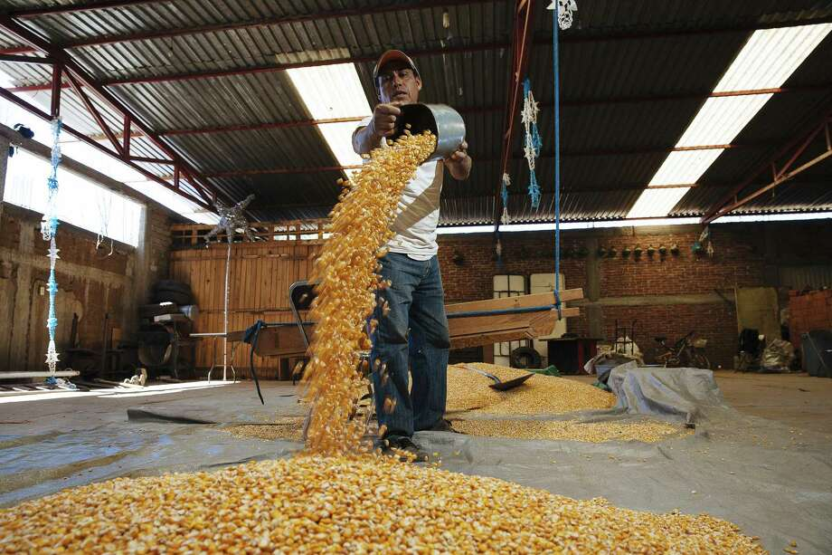 """Mexico imports much of the corn it consumes from the U.S. So, is it """"bad"""" that Mexico has a trade deficit in corn to the U.S.? President Trump is just as selective in choosing to slam NAFTA because the U.S. has a deficit in some goods with trade with Mexico and Canada. Photo: RODRIGO CRUZ /NYT / NYTNS"""