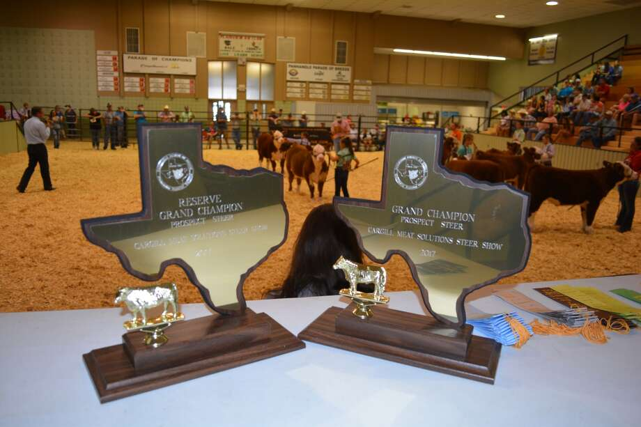 The grand and reserve grand champion trophies bracket action in the show ring Saturday morning during the Prospect Steer Show portion of the 35th Annual Panhandle Parade of Breeds. One of the premiere junior livestock shows in the state, judging in this year's contest was held Friday and Saturday.
