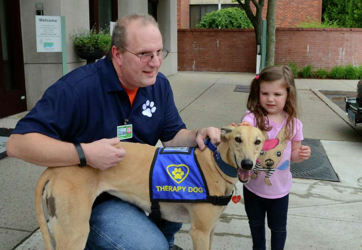 David Nardone, a volunteer with People and Animals Working in Spirit (P.A.W.S.), Griffin Hospital's Pet Therapy Program, introduces therapy greyhound Mandy to Olivia Bambery, 3, of Seymour, during a meet-and-greet with the Connecticut Emergency Animal Response Service (EARS) at the hospital in Derby, Conn., on Saturday June 17, 2017. EARS is a team of volunteer first responders trained for rapid-response to