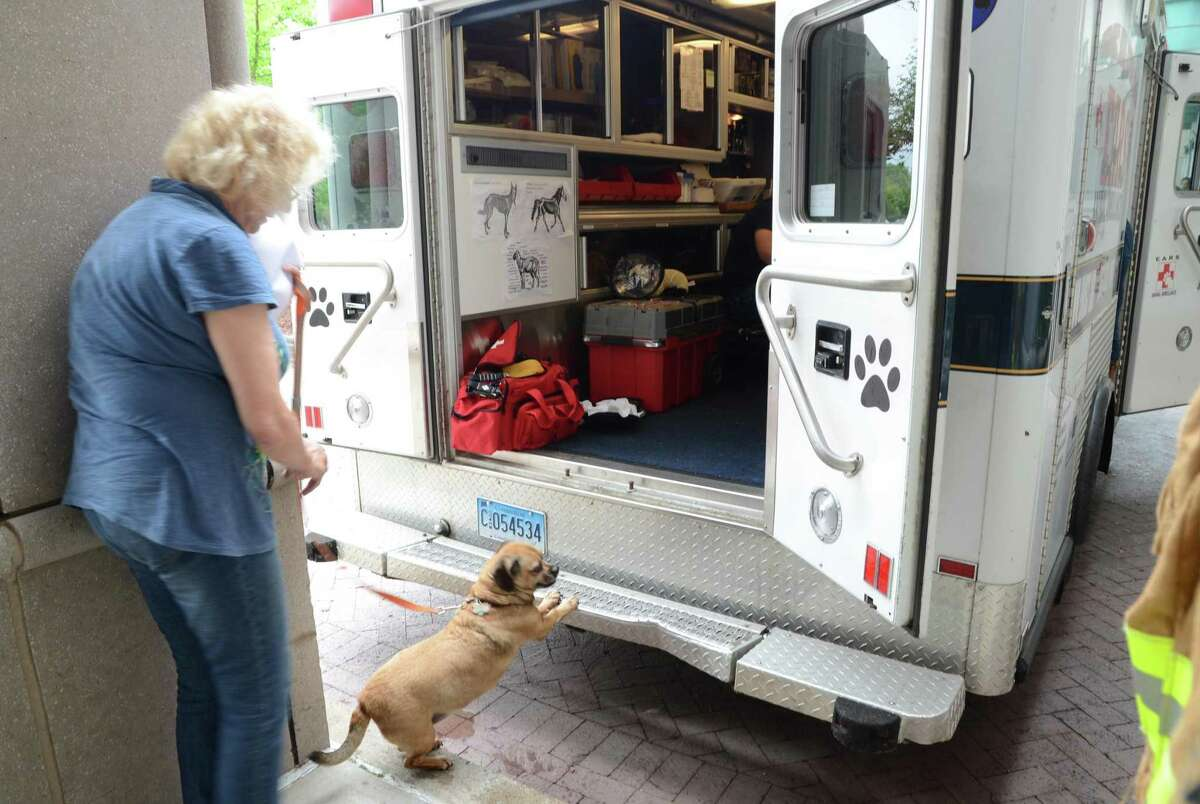Carol Zolovchik, of Ansonia, watches as her dog Melinda tries to get a better look inside the Connecticut Emergency Animal Response Service (EARS) ambulance during a meet-and-greet with the organization at Griffin Hospital in Derby, Conn., on Saturday June 17, 2017. EARS is a team of volunteer first responders trained for rapid-response to