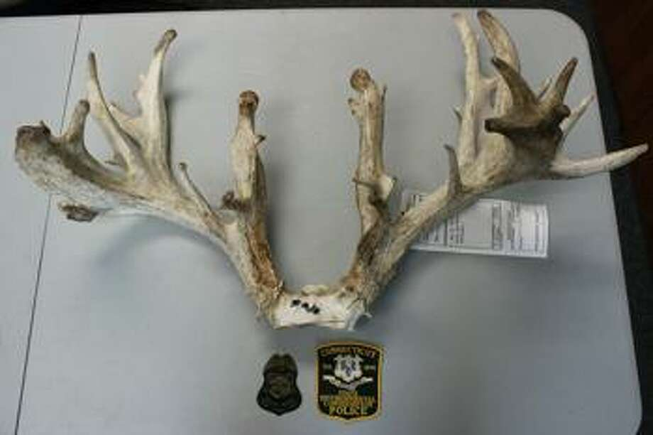 A Newtown man has been arrested for bringing the carcass of a suspected diseased deer back to Connecticut. Wayne Simko, 65, was arrested earlier this month on charges that he illegally brought the dead buck to Connecticut from a deer farm in Pennsylvania, a state that has confirmed cases of Chronic Wasting Disease. Shown is the rack of the deer. Photo: EnConn Polcie