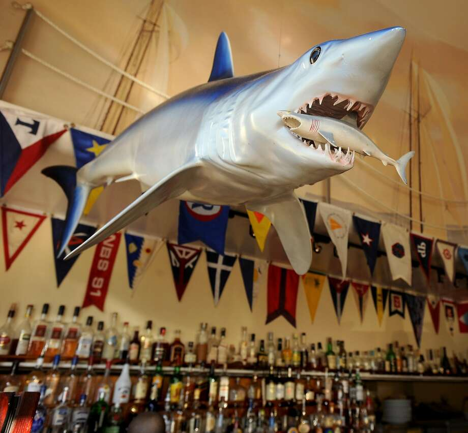 A shark hangs over the bar at the Walnut Creek Yacht Club. Photo: Noah Berger, Special To The Chronicle