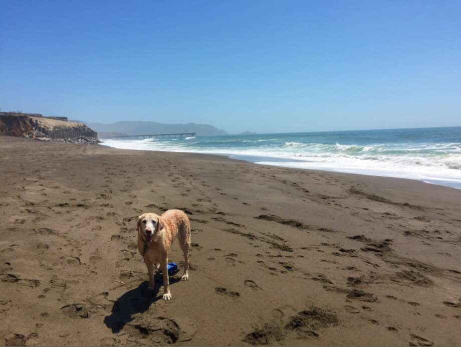 "This dog escaped the heat Monday by heading to Pacifica. @HikesDogsLove shared the photo on Twitter, saying, ""Secret, secluded beach in Pacifica! 66 degrees here."" Photo: @hikesdogslove Via Twitter"