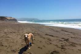 """This dog escaped the heat Monday by heading to Pacifica. @HikesDogsLove shared the photo on Twitter, saying, """"Secret, secluded beach in Pacifica! 66 degrees here."""""""