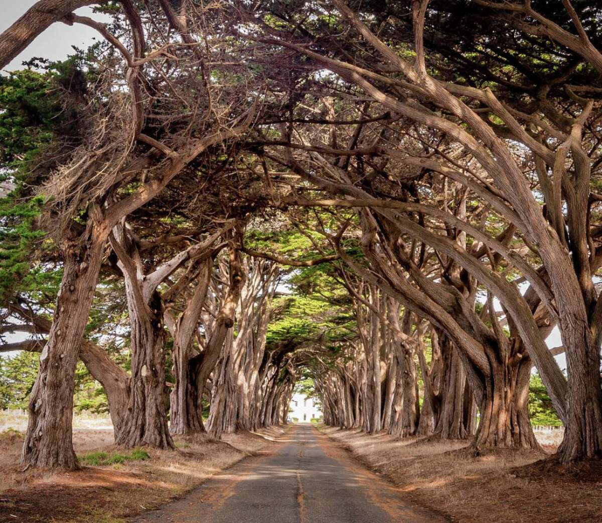 Cypress Tree Tunnel Perhaps you've seen this famous tree formation on Instagram. You can find it - and snap your own epic picture - in Point Reyes National Seashore off Sir Francis Drake Boulevard.  Google Maps location