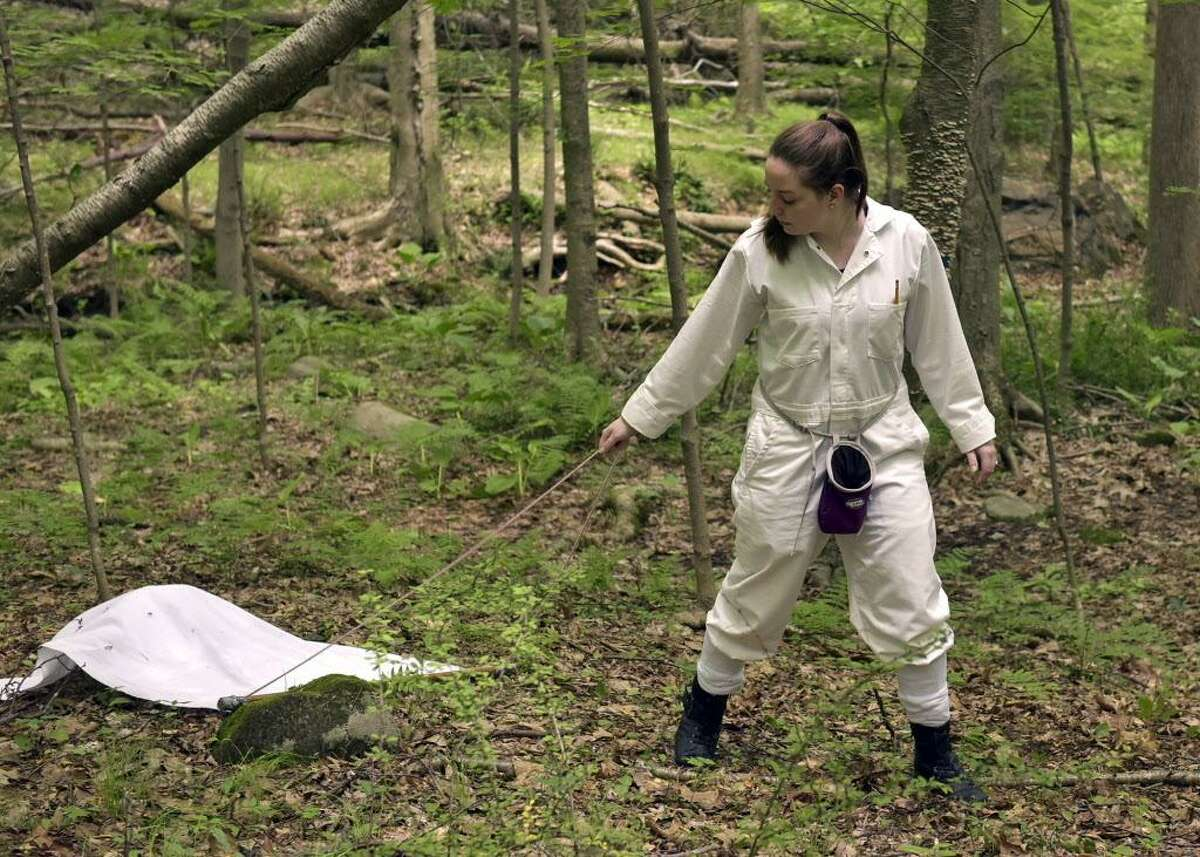 Brittany Schappach, a Western Connecticut State University student, collects ticks.
