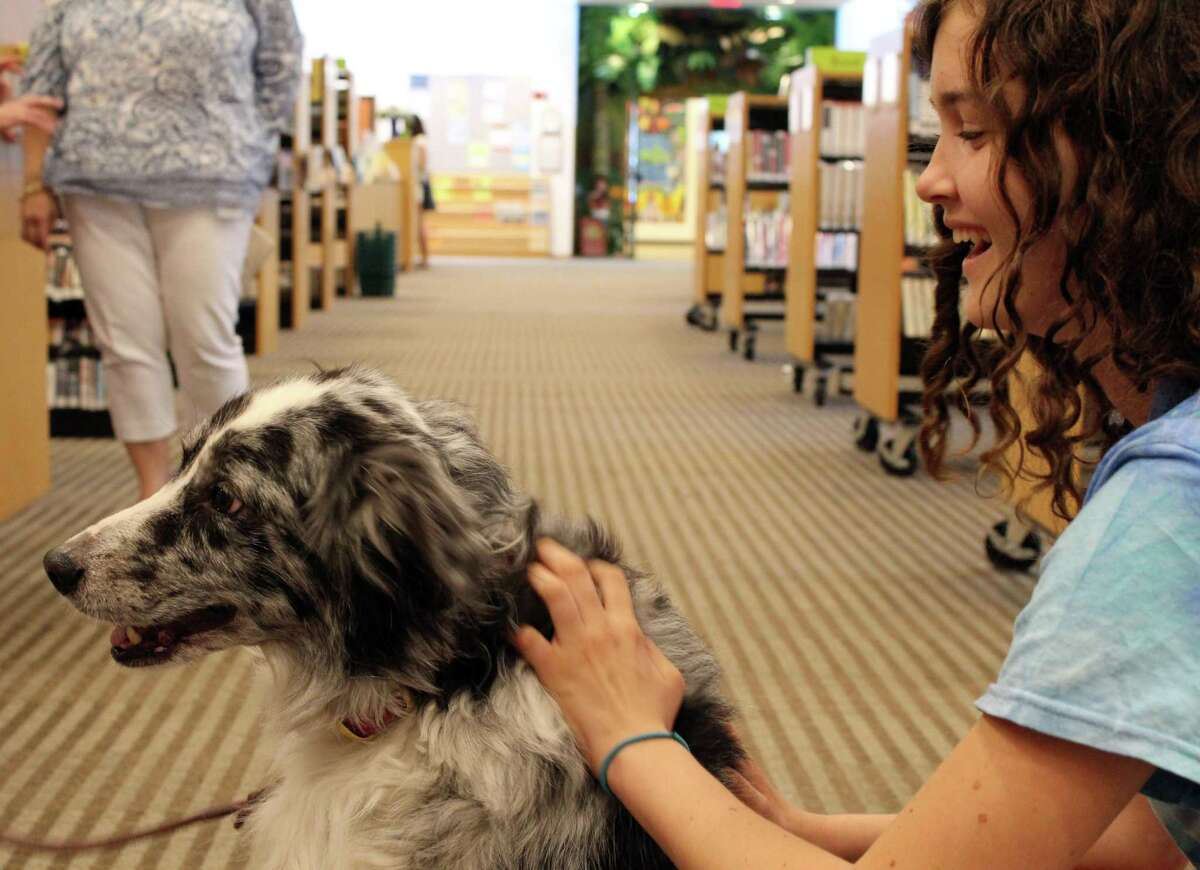 Kennedy Snyder takes a break from studying to pet Rooney, a therapy dog from Ridgefield Operation for Animal Rescue, at Wilton Library on Tuesday, June 20, 2017.