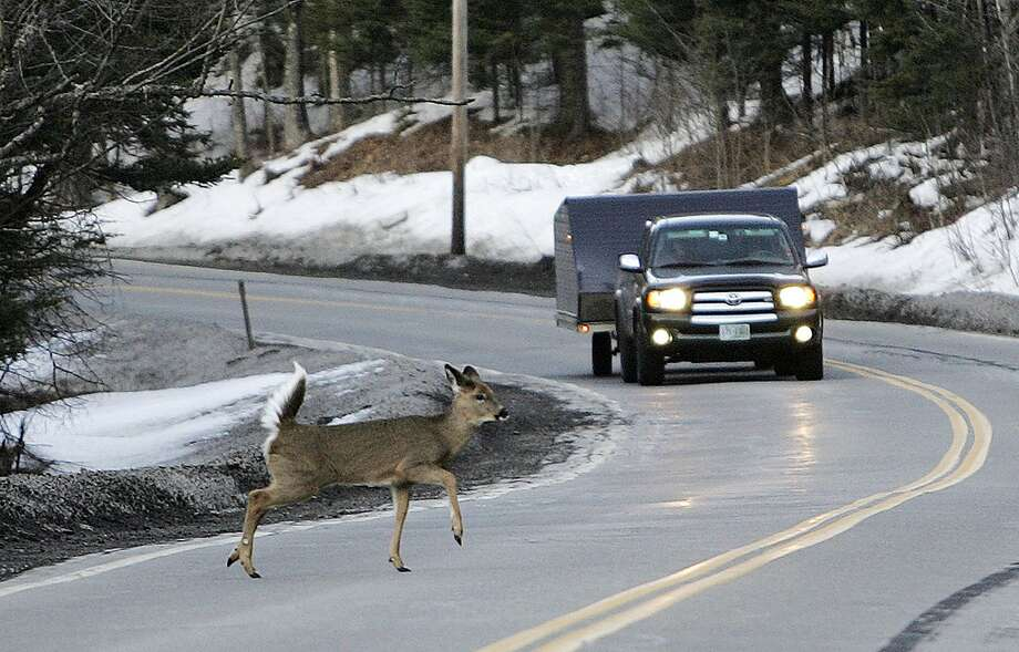 A deer runs across the road in Pittsburg, N.H. Click through the gallery for a look at weird laws about pets and animals in the Bay Area. Photo: Jim Cole, Associated Press